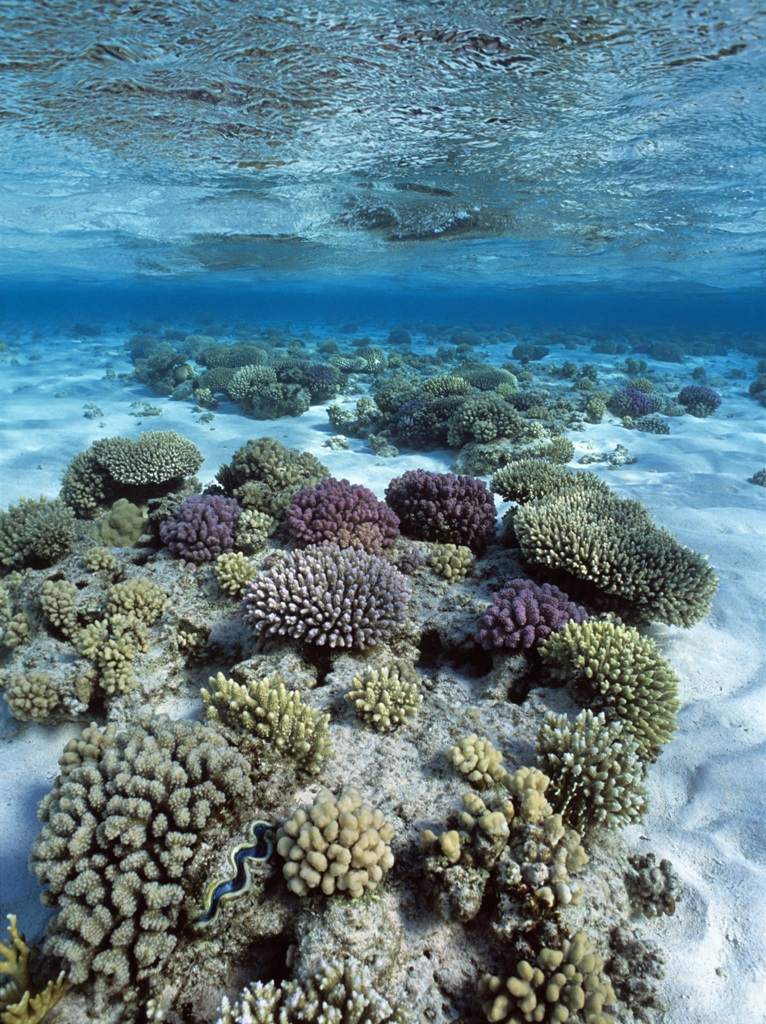Coral reef, photo by Jeff Rotman