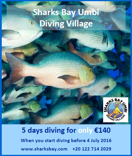 5 days diving special offer